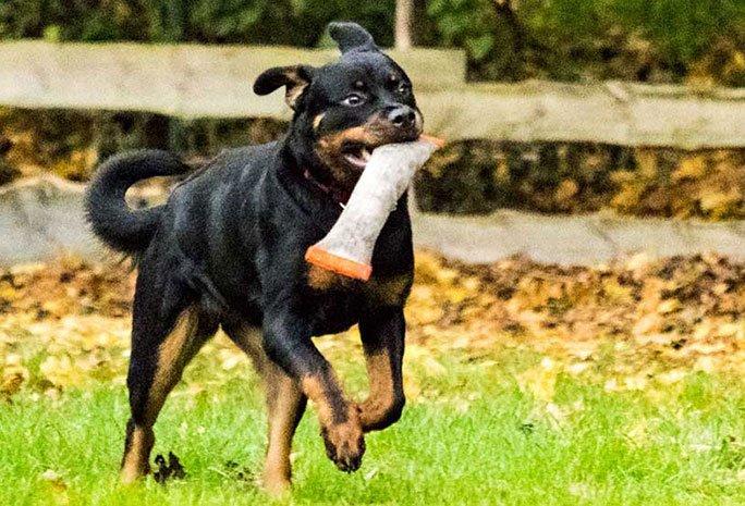 Spielgruppe für große Hunde
