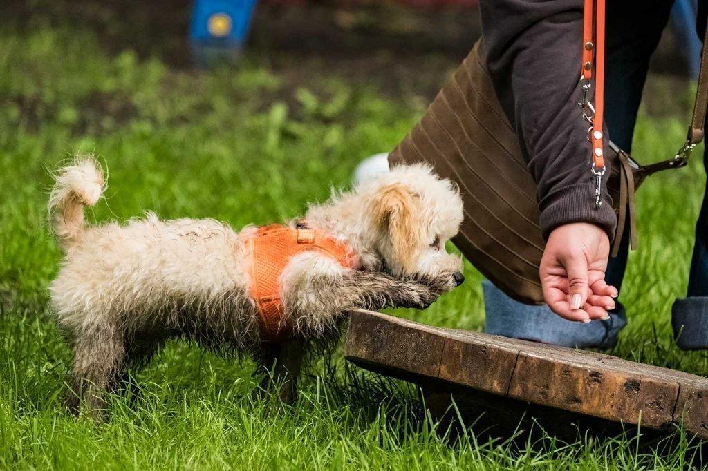 Fotoshooting beim Hundetraining