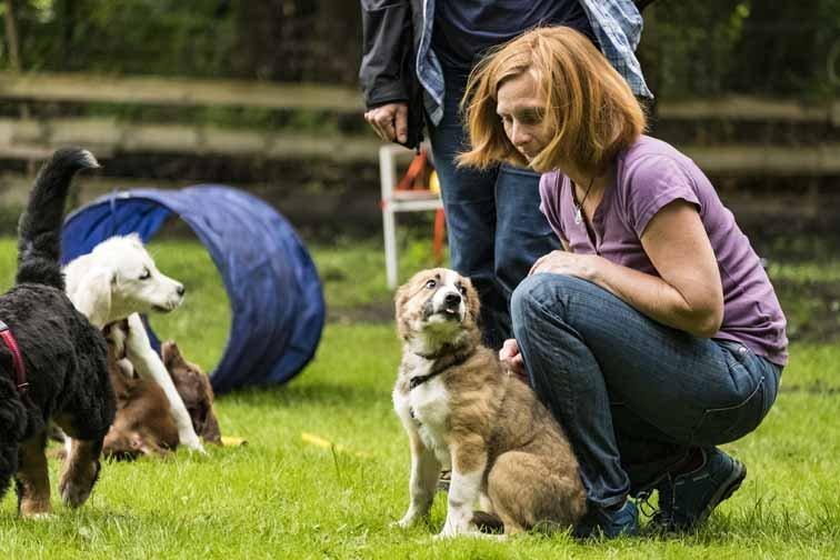Hundetrainerausbildung