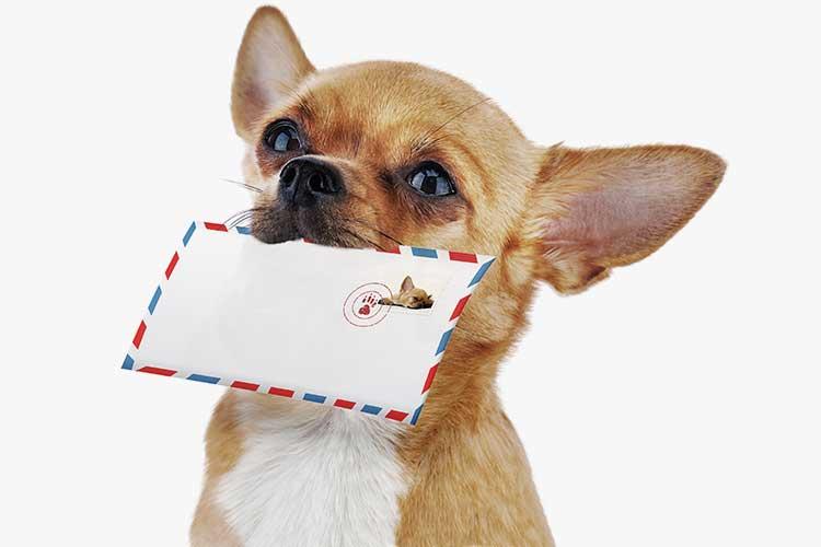 Newsletter Hund