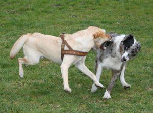Hund-Hund-Aggression