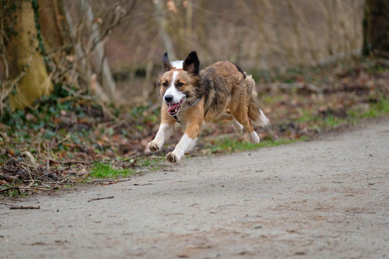 Bewegungschmerz bei Hunden