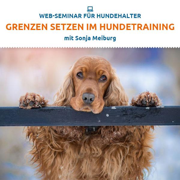 Webinar - Grenzen setzen im Hundetraining