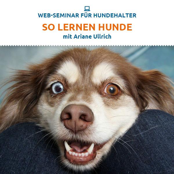 Webinar - So lernen Hunde