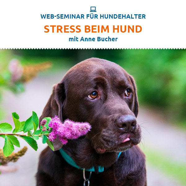 Webinar - Stress beim Hund